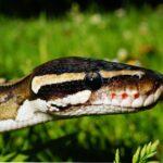 Anger management for kids- snake